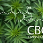 Pourquoi un dosage correct du CBG est-il nécessaire ?