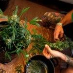 Est-ce que le cannabis peut avoir un usage récréatif ?
