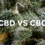 Comment différencier le CBD et le CBG ?