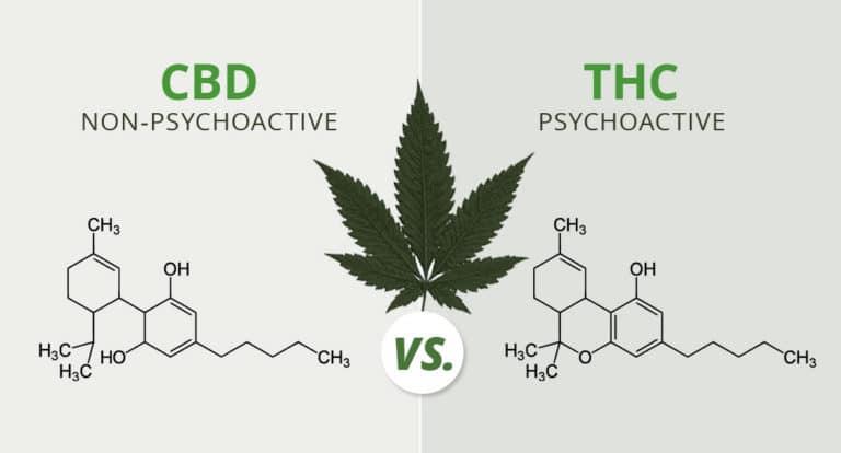 quelles est la difference entre le THC et le CBD ?